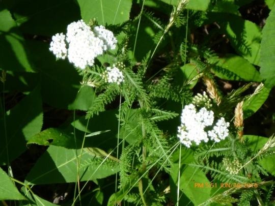 b-wild-flowering-trademarked